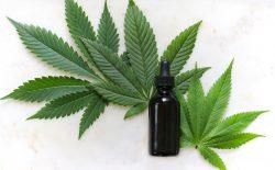 cannabis beauty