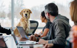 pet friendly offices