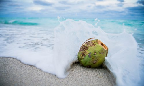 coconut in the ocean